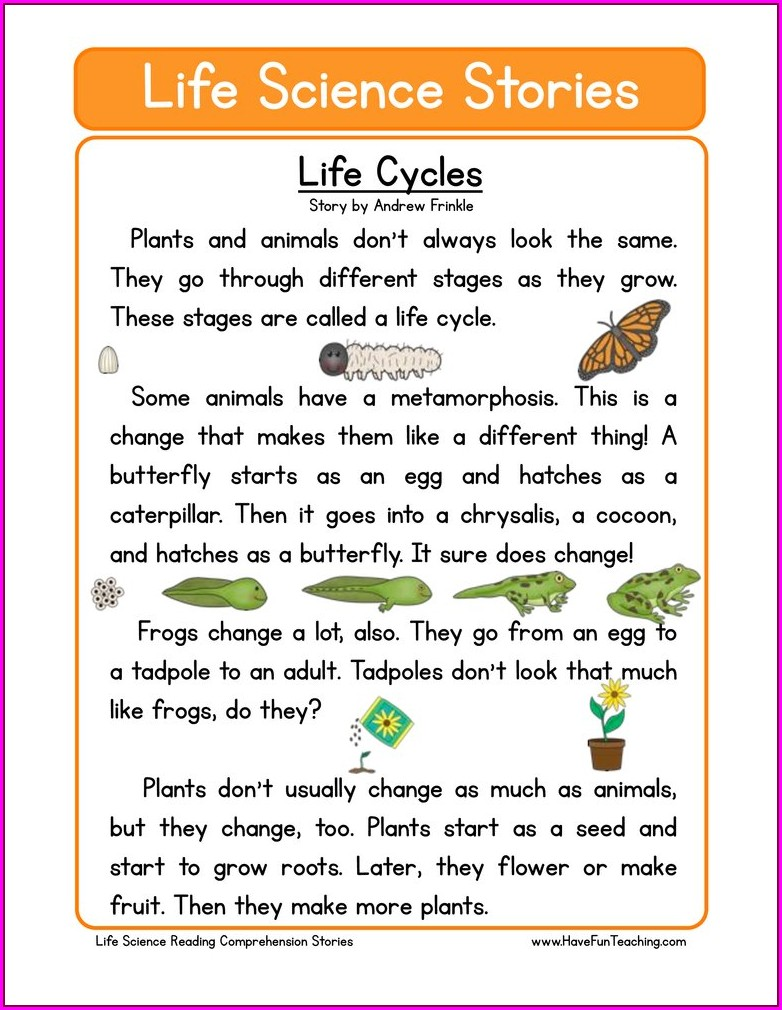 Free Human Life Cycle Worksheet