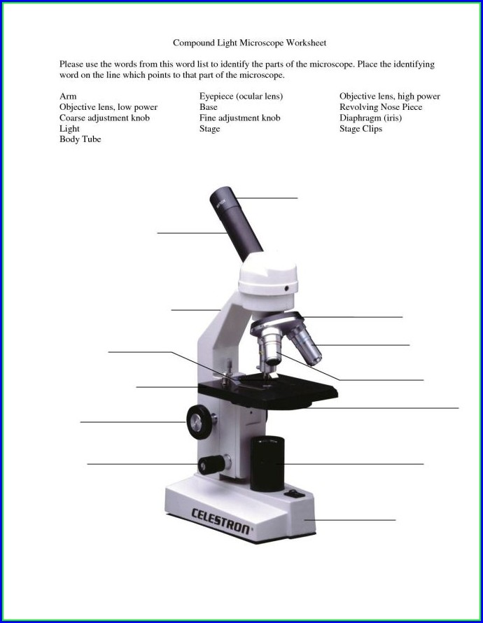 High School Microscope Worksheet