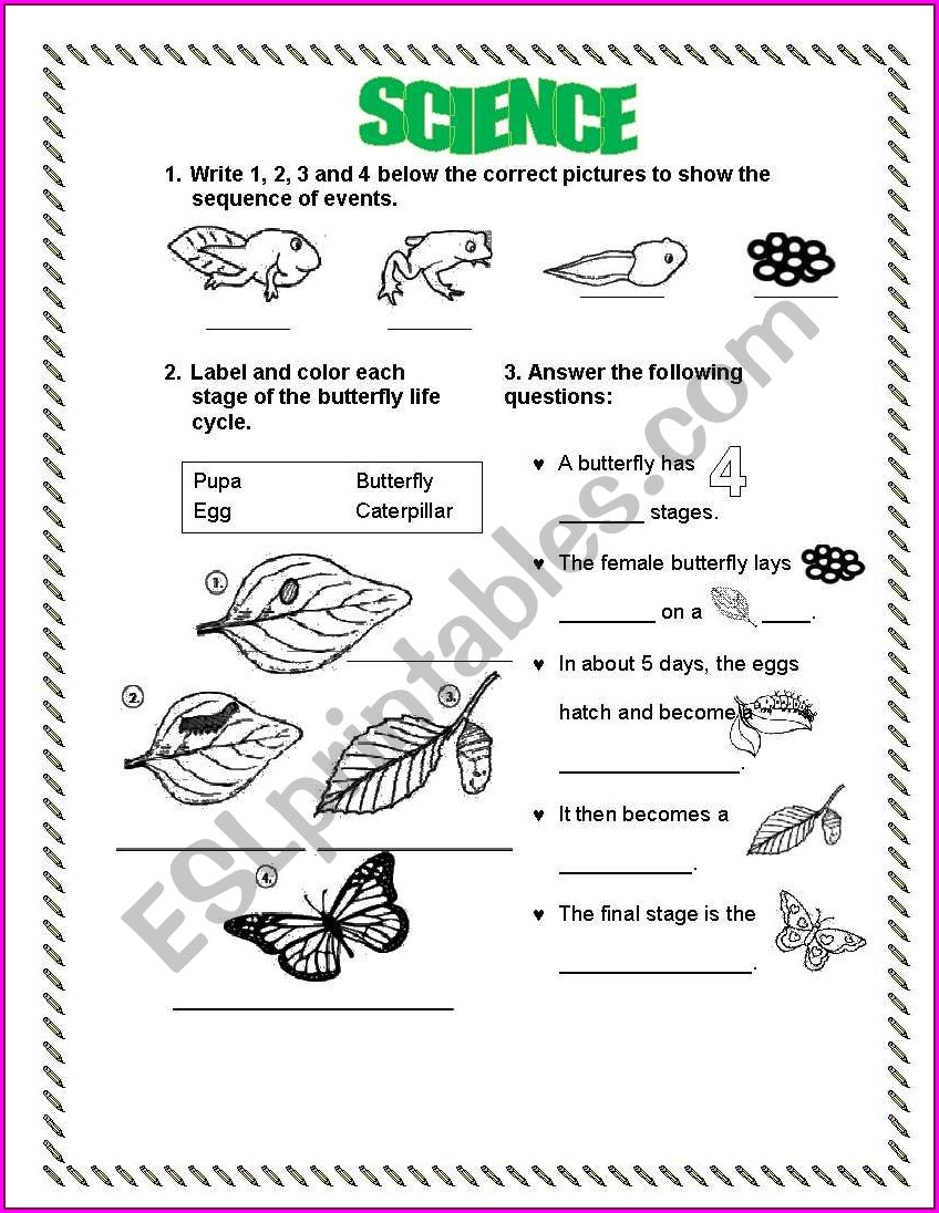 Human Life Cycle Worksheet Grade 4