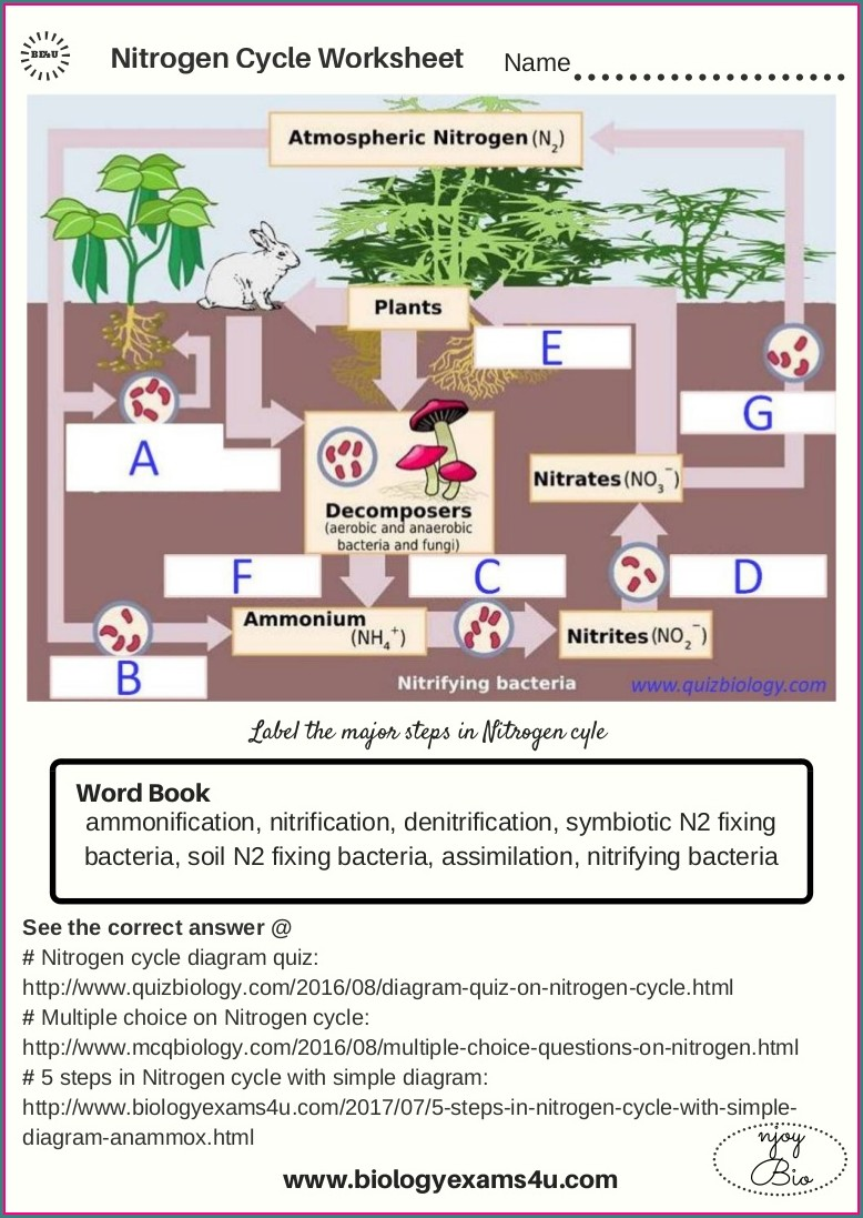 Nitrogen Cycle Diagram Worksheet Answers