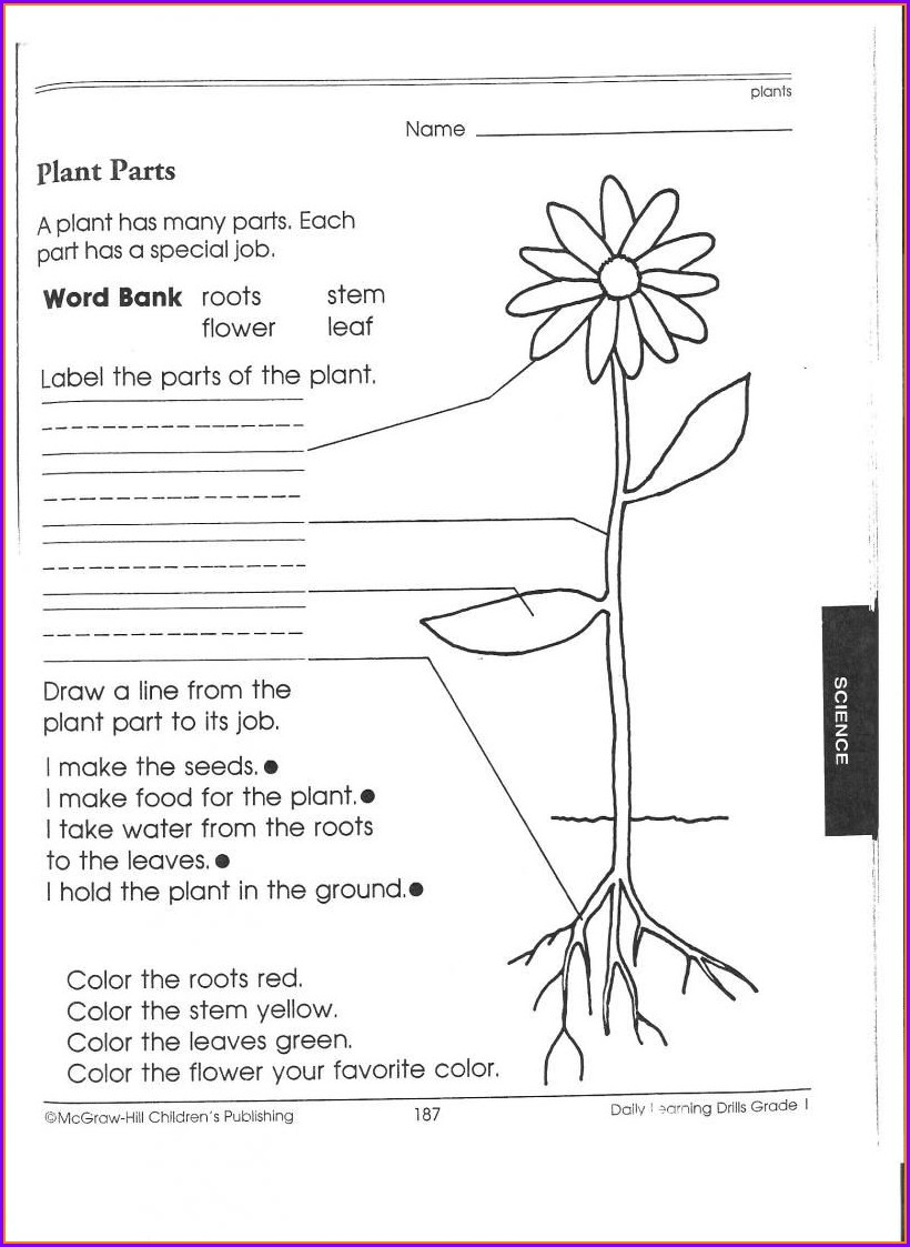 Science Tools Worksheet For First Grade