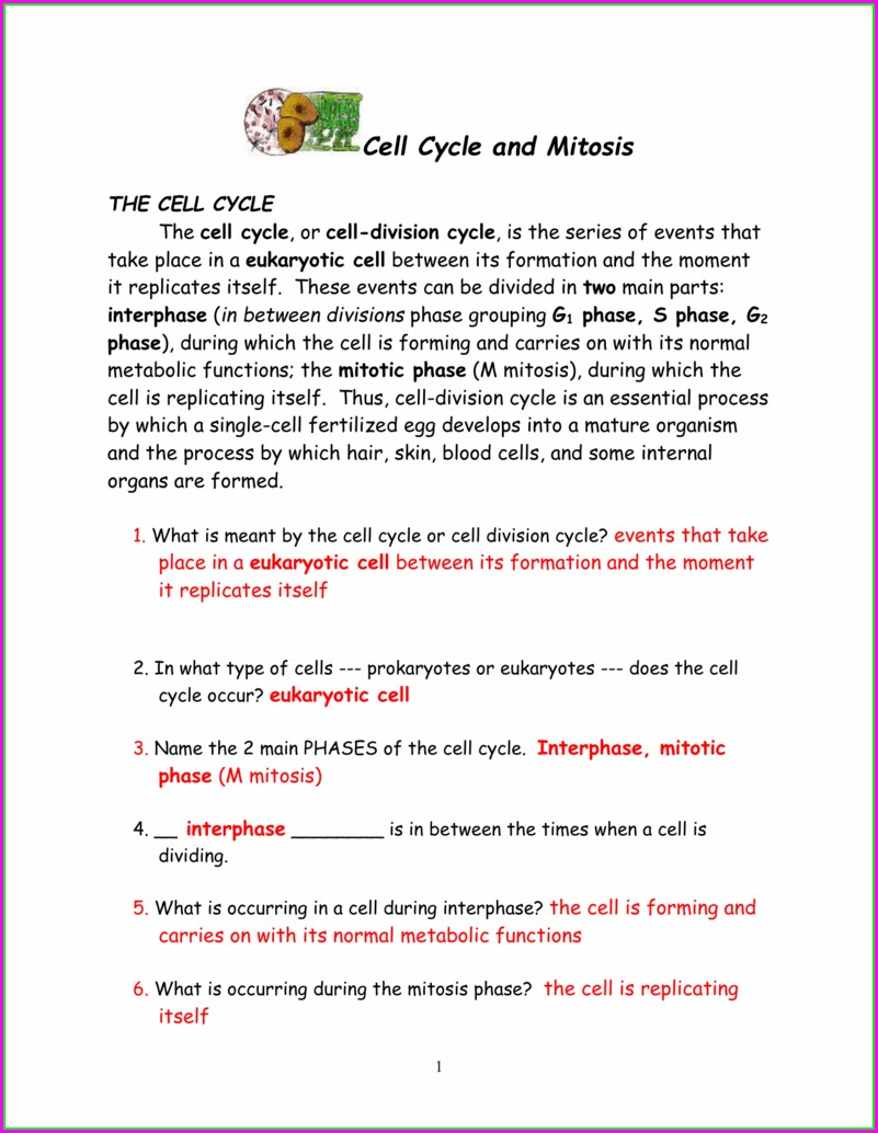 The Cell Cycle Worksheet Back Answers