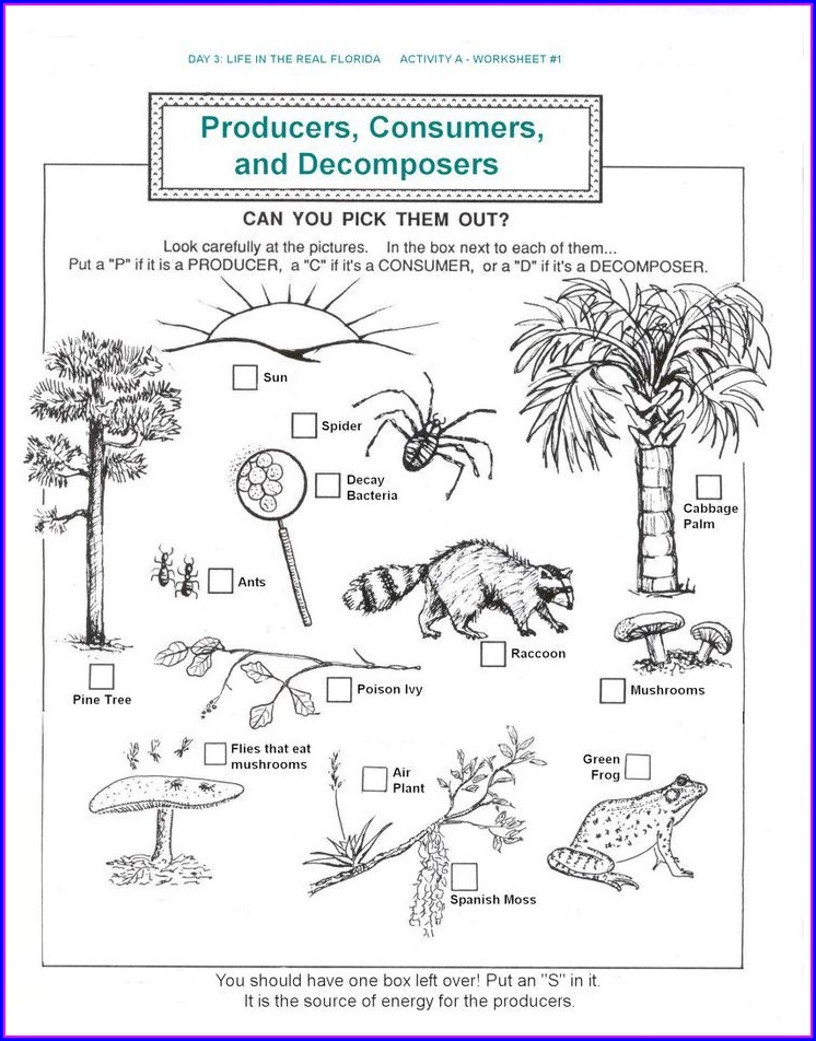 5th Grade Science Ecosystem Worksheets