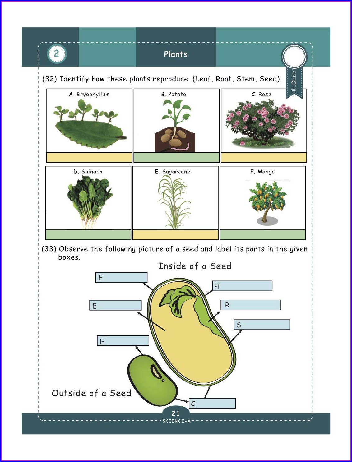 5th Grade Science Worksheets For Grade 5 Plants