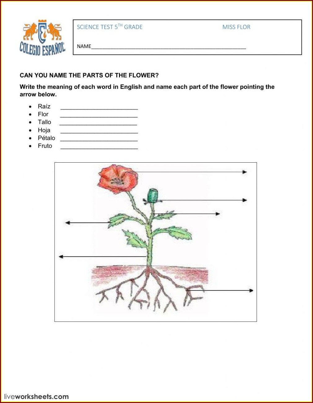 5th Grade Science Worksheets On Plants