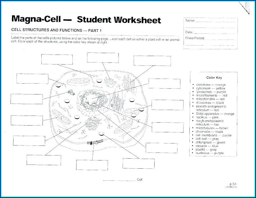Cell Cycle Mitosis Labeling Worksheet