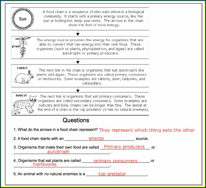 Complete The Food Chain Worksheet Answers