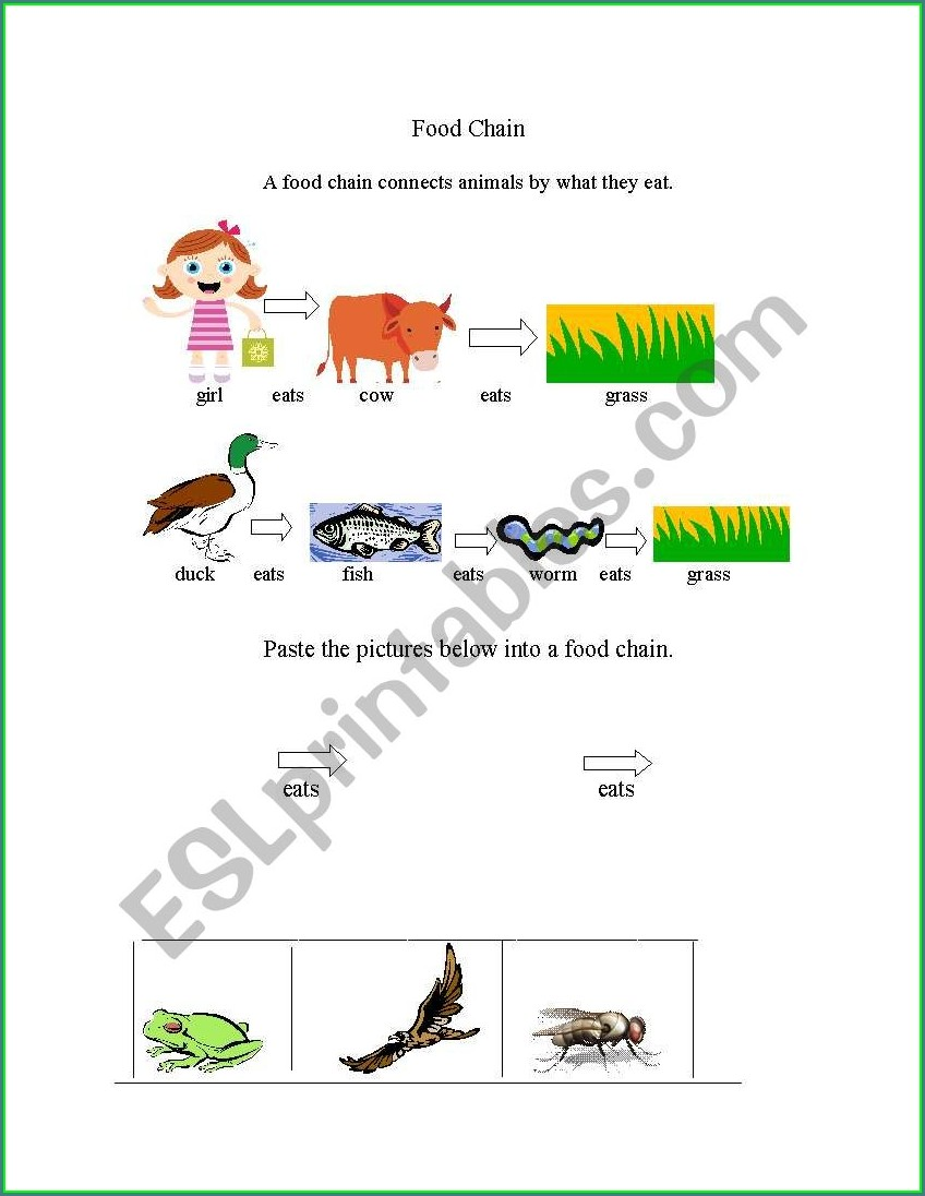 Food Chain Worksheet Elementary