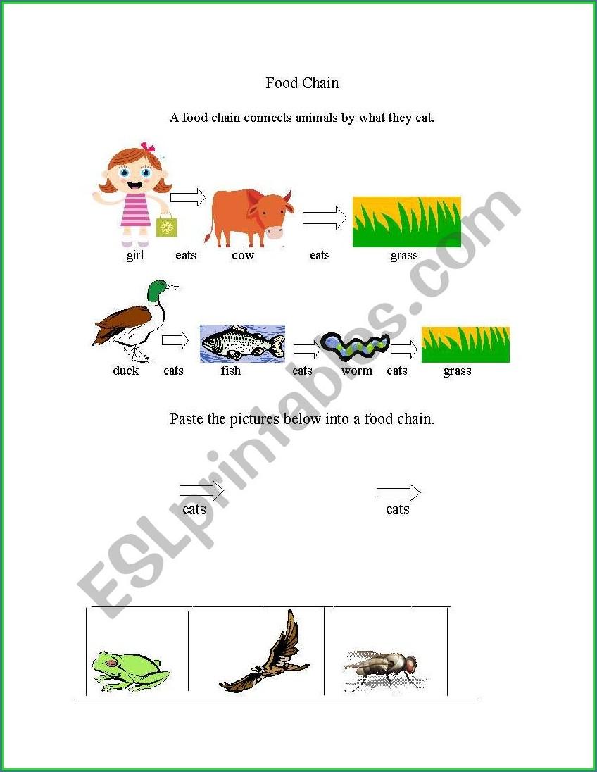 Food Chain Worksheet Elementary