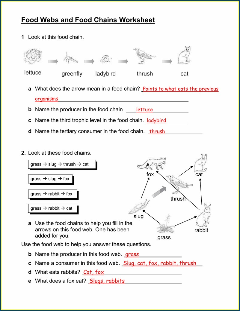 Food Web And Food Chain Worksheet Answers