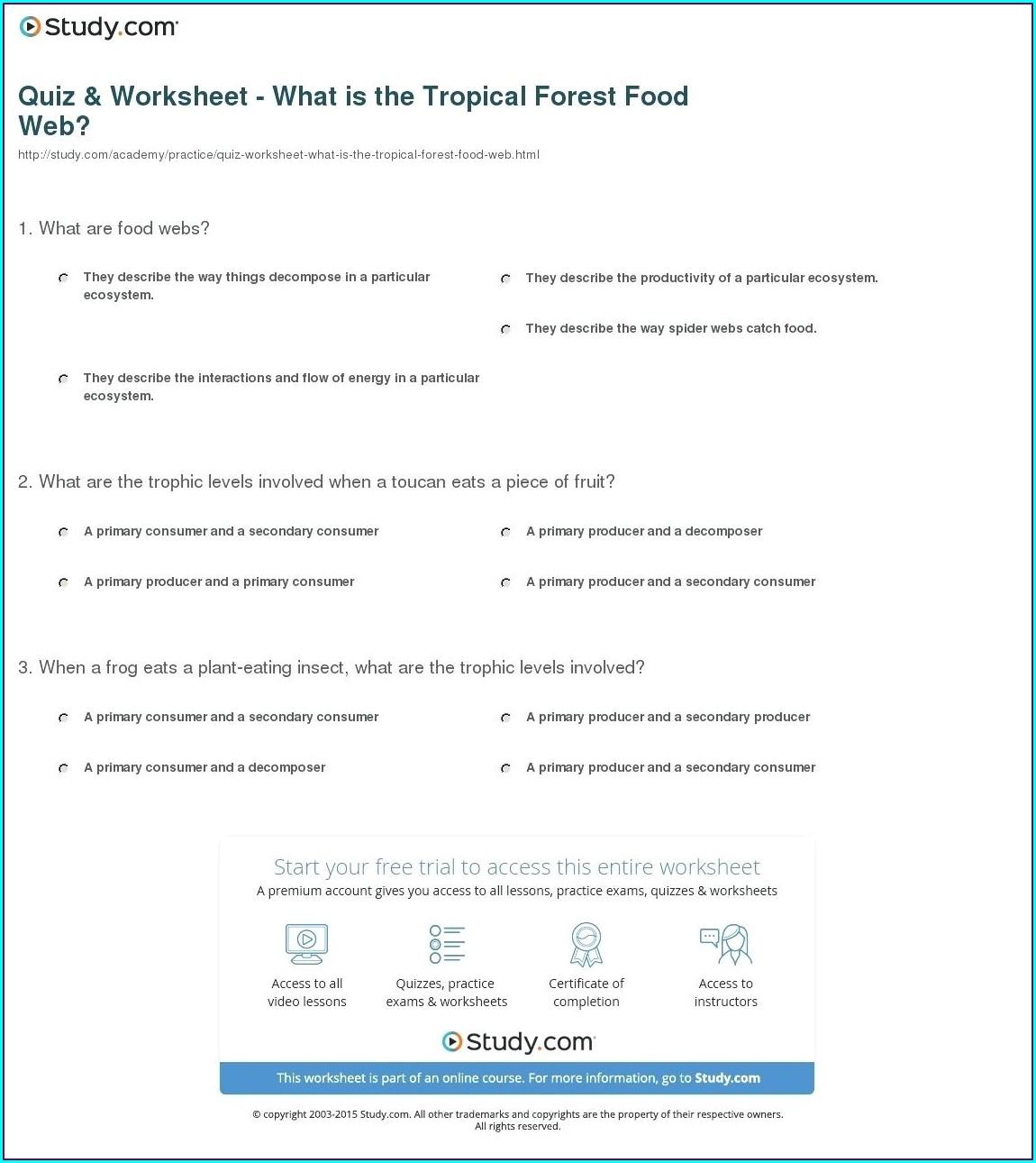 Food Web Worksheet Elementary