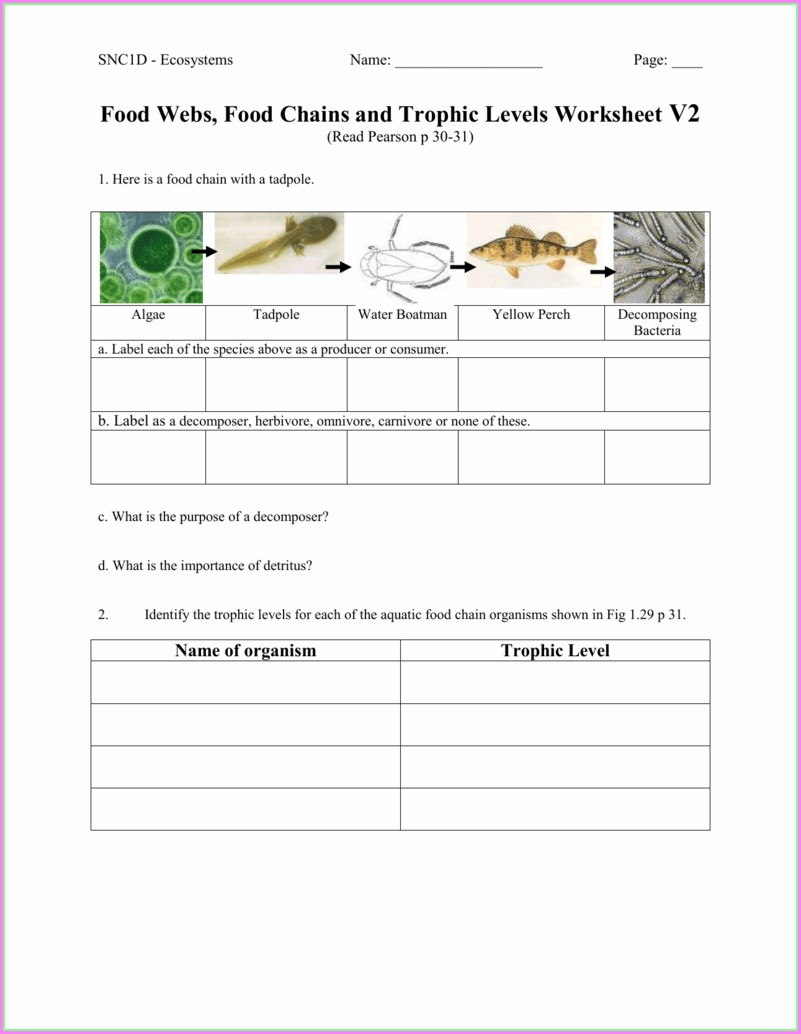 Food Webs Worksheet #1 Answers