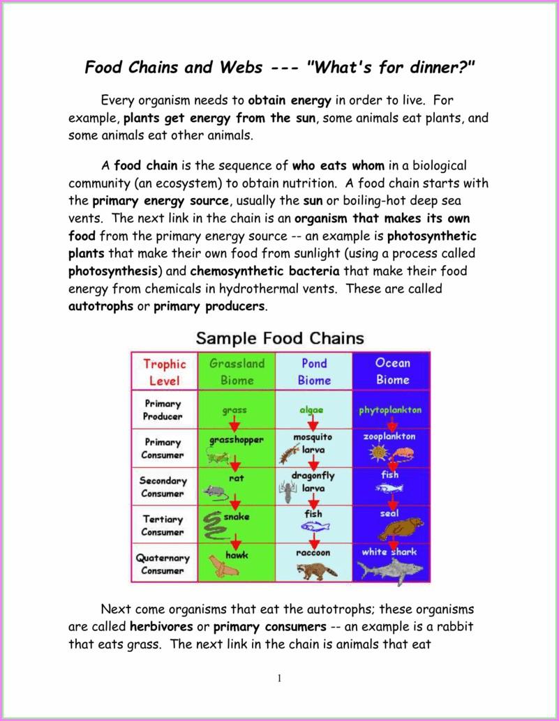 Food Webs Worksheet Answers