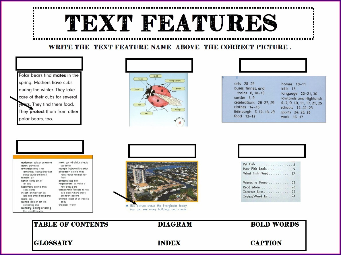 Free Text Features Worksheet 1st Grade