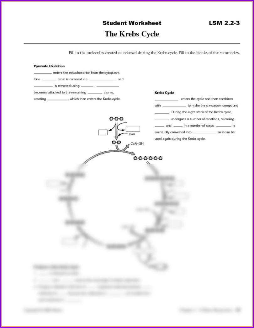 Photosynthesis Calvin Cycle Worksheet Worksheet : Resume