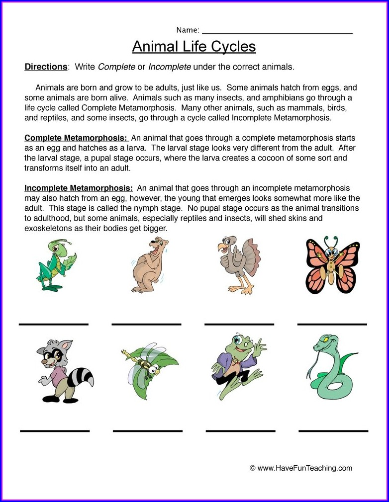 Life Cycle Of Animals Worksheet Grade 4