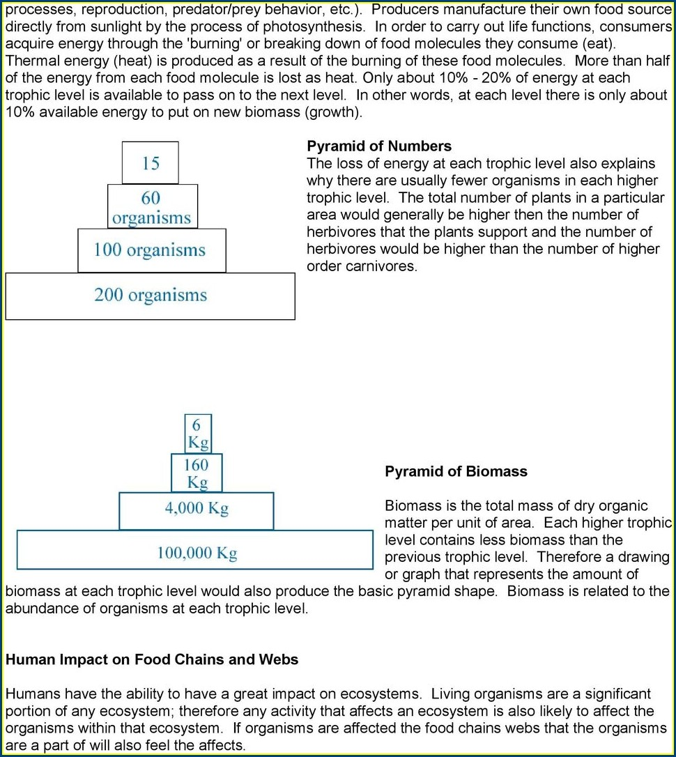 Middle School Food Chain Worksheet Answers