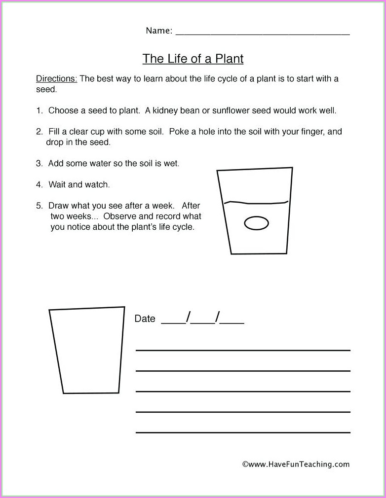 Plants Cycle Life Worksheet