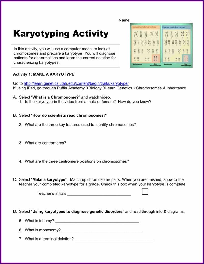 Reading Karyotypes Worksheet Answers