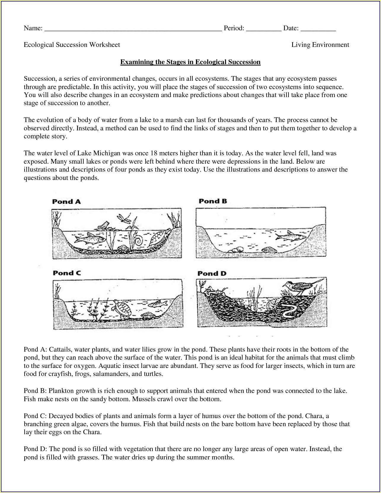 3rd Grade Free Printable Ecosystem Worksheets