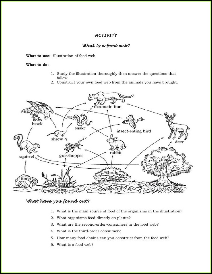 6th Grade Food Web Worksheet