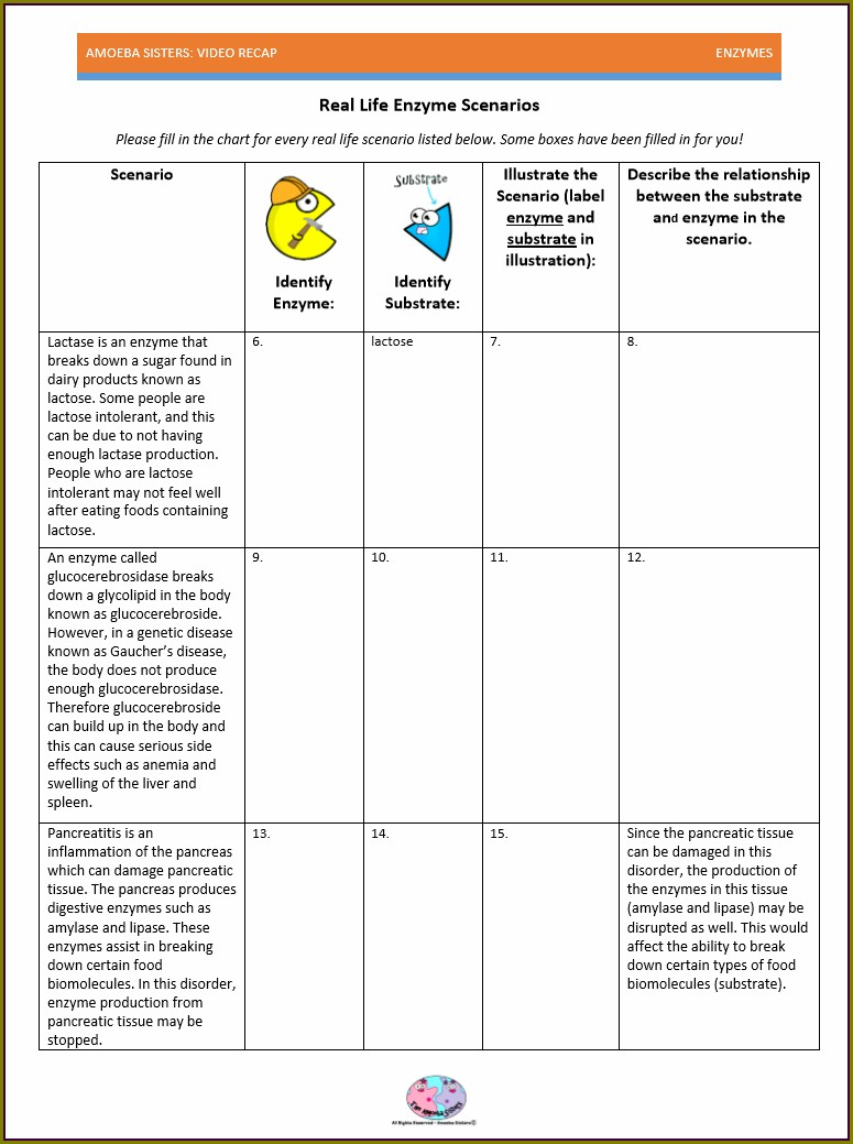 Amoeba Sisters Food Web Worksheet Answer Key