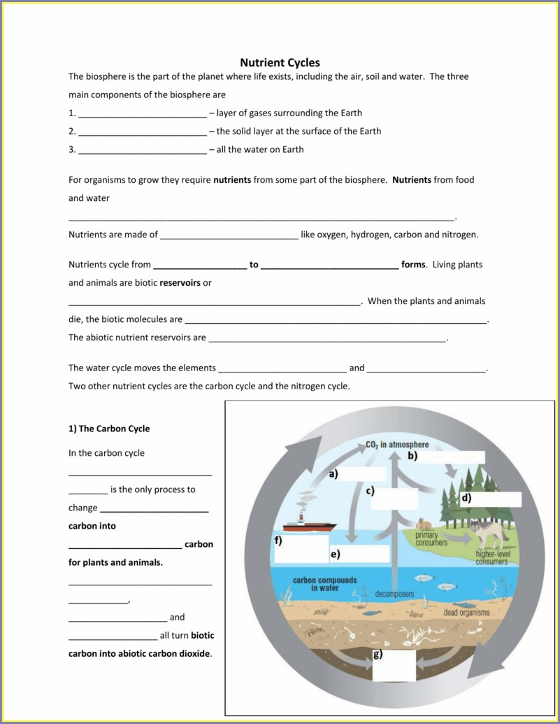 Answer Key Nutrient Cycle Worksheet