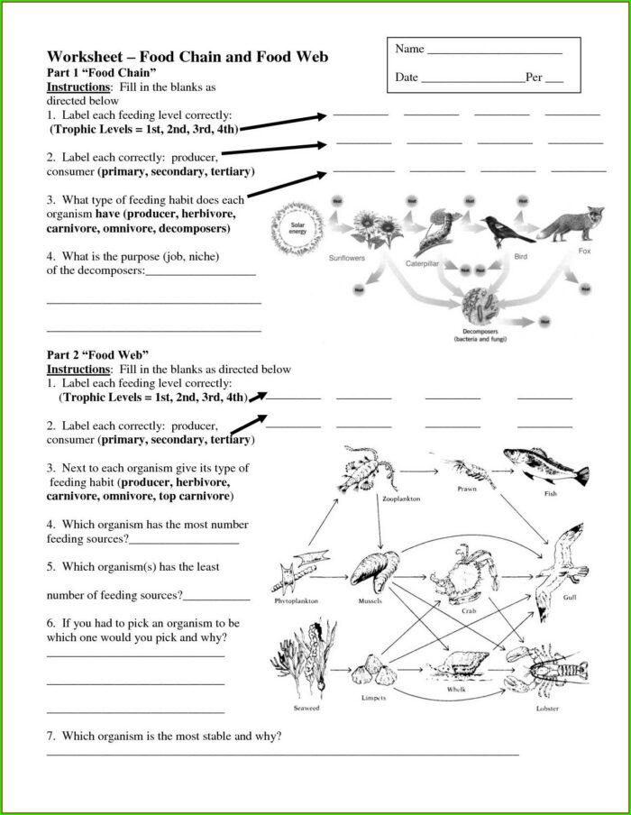 Answer Worksheet Food Chain Quiz