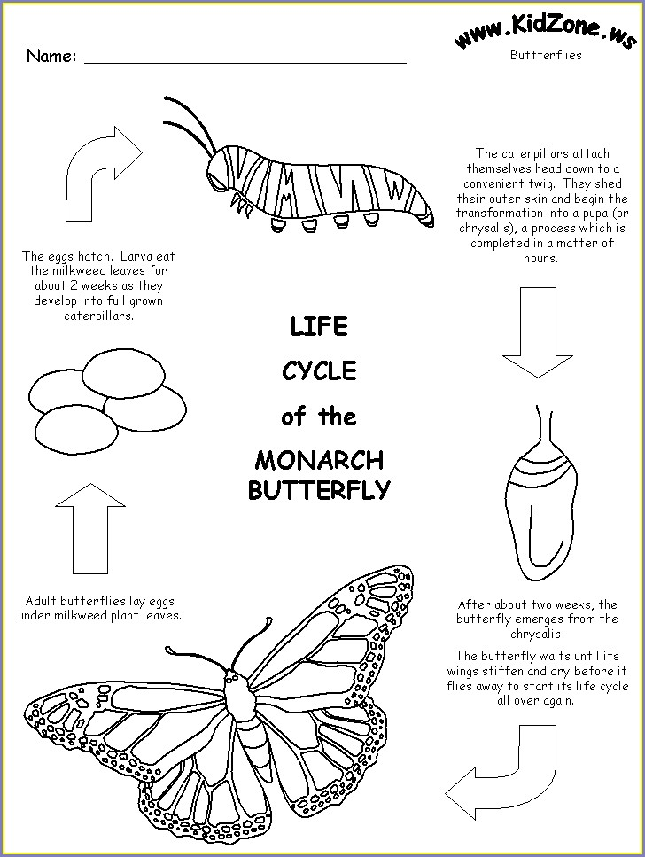 Butterfly Life Cycle Worksheet Free Download