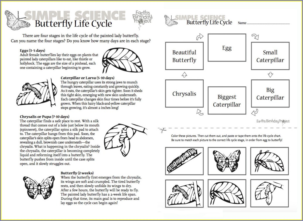 Butterfly Life Cycle Worksheet Free