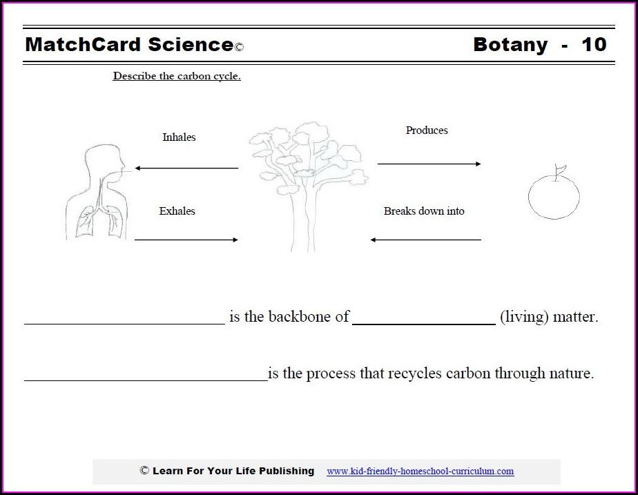 Carbon Dioxide Oxygen Cycle Diagram Worksheet