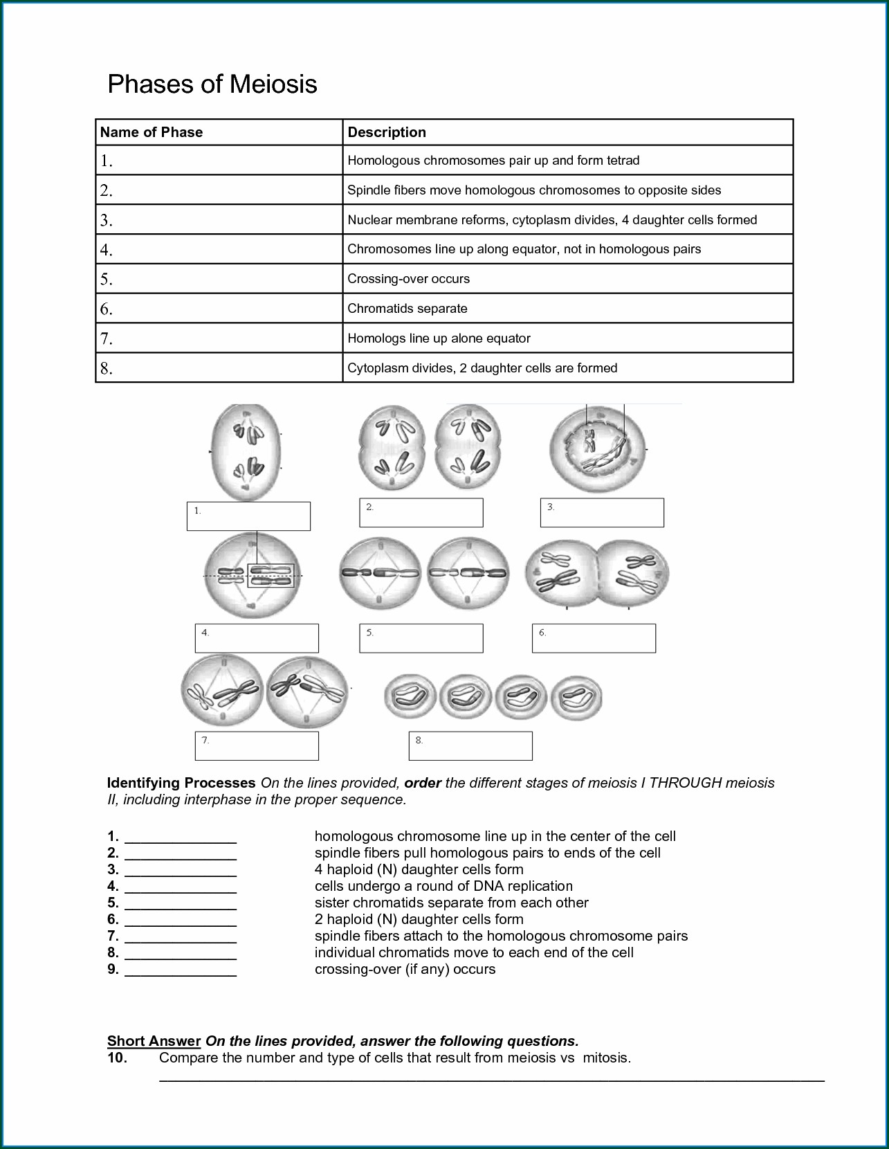 Cell Cycle Mitosis And Meiosis Worksheet Answers