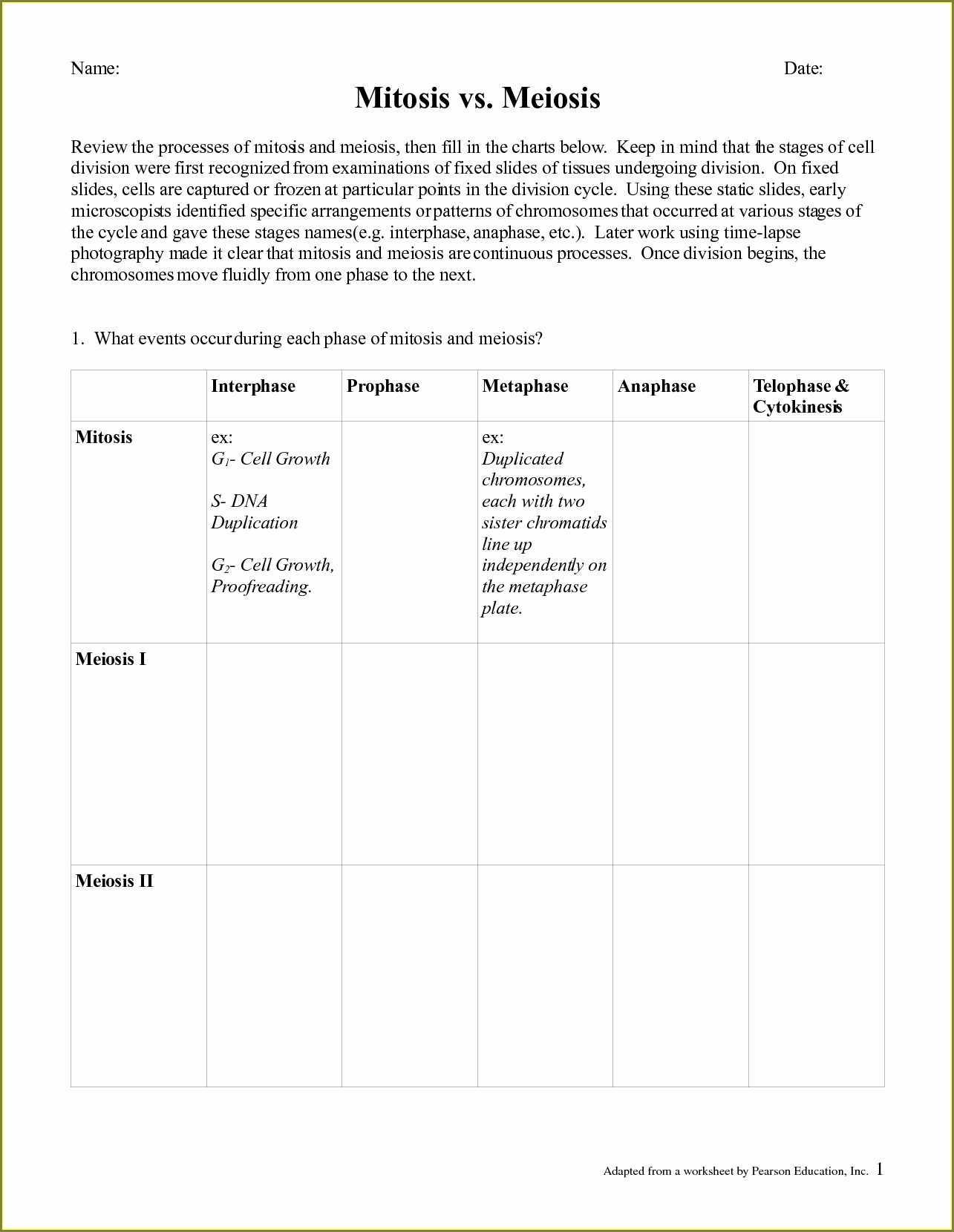 Cell Cycle Stages Worksheet