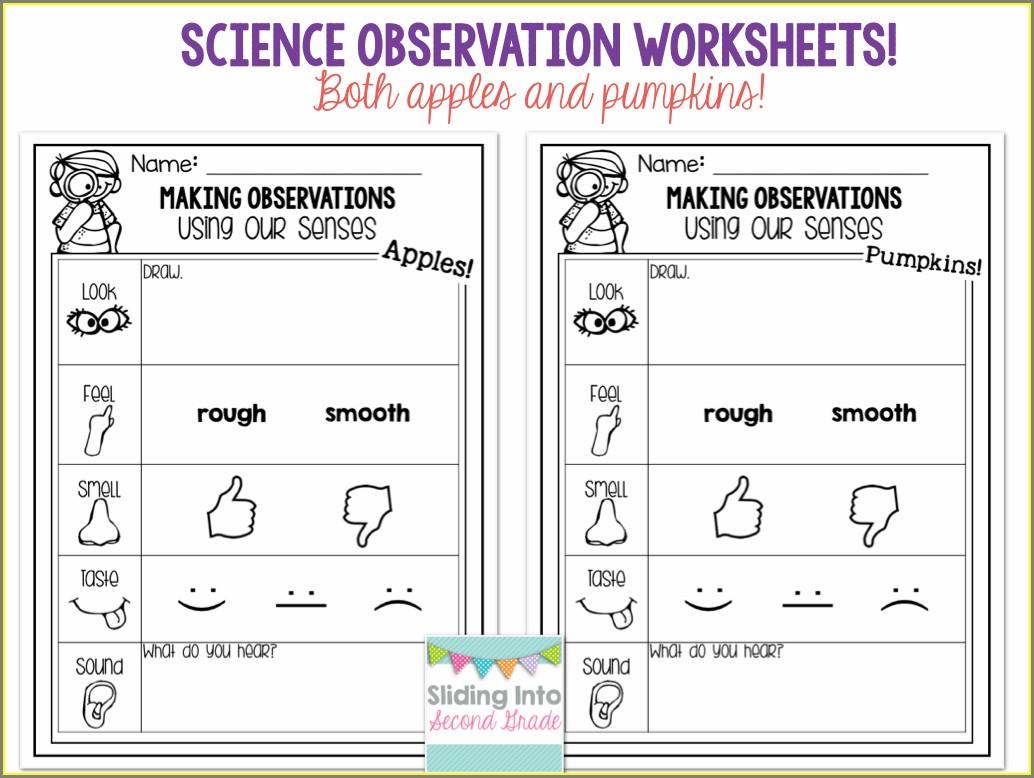 First Grade Science Observation Worksheet