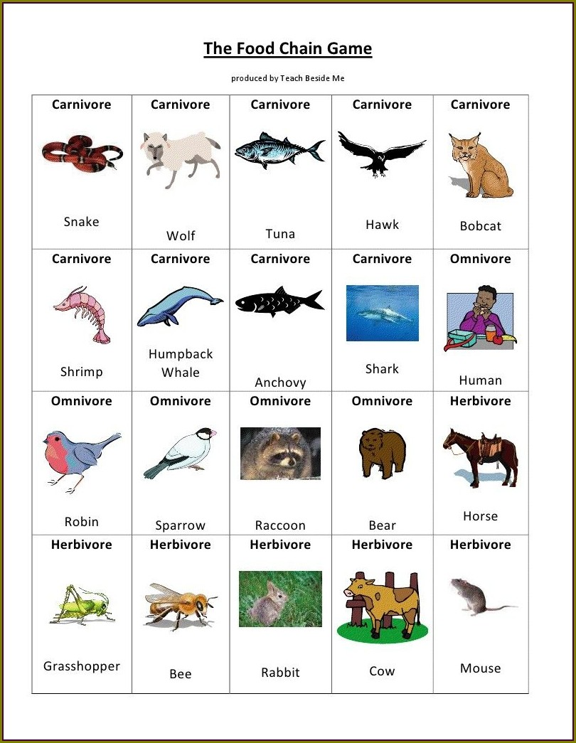 Food Chain Worksheet For 6th Grade
