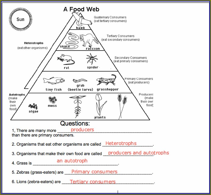 Food Chain Worksheet Middle School