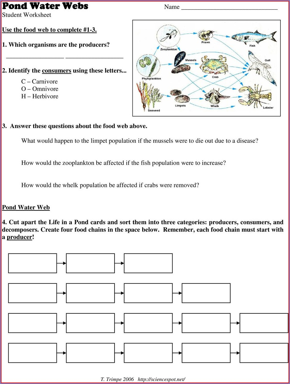 Food Web Cut Out Worksheet