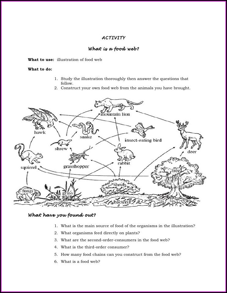 Food Web Worksheet Year 6
