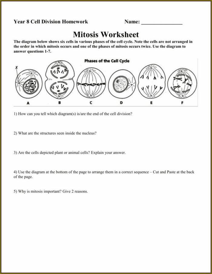 High School Mitosis Worksheet And Diagram Identification