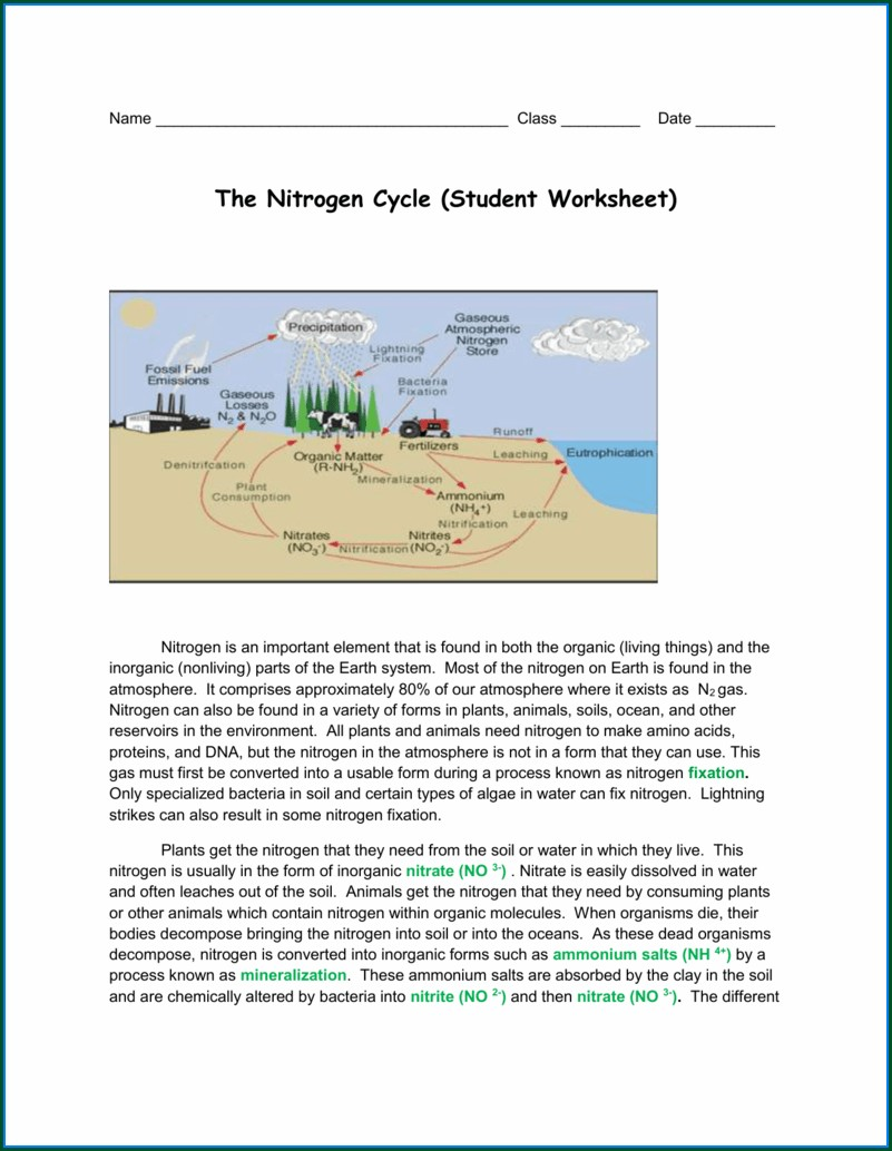 High School Nitrogen Cycle Worksheet Answer Key