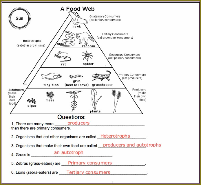 Interpreting A Food Web Worksheet Answer Key