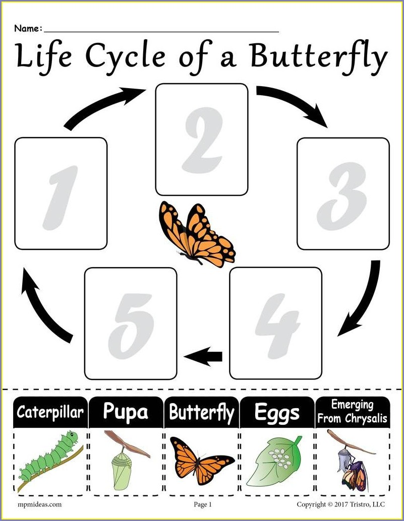 Life Cycle Of A Butterfly Worksheet Free Printable