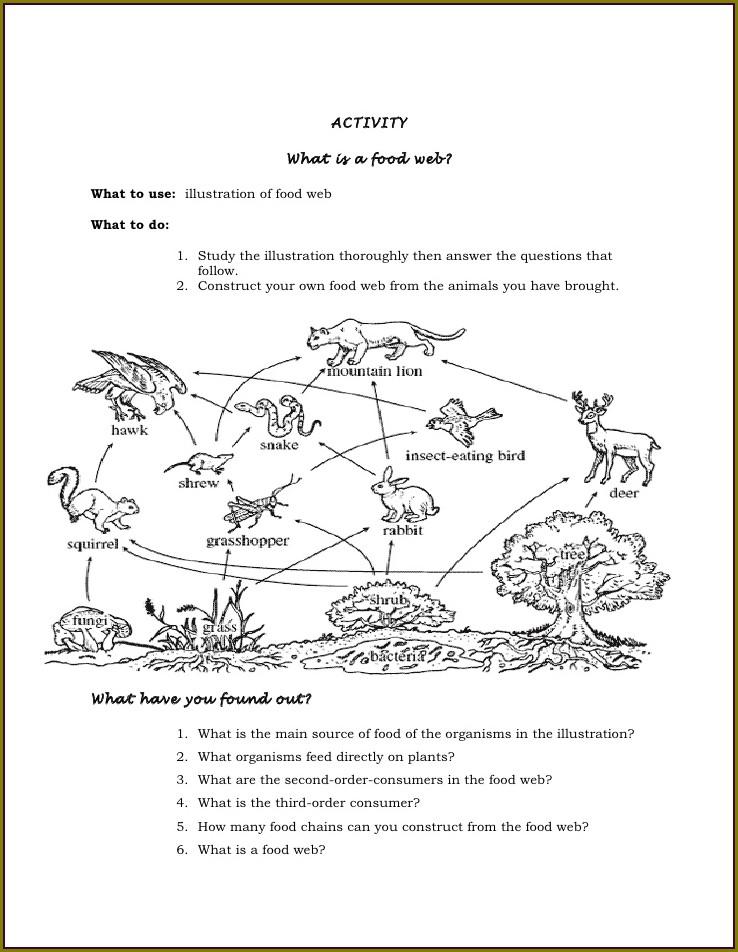 Marine Food Web Worksheet Answer Key