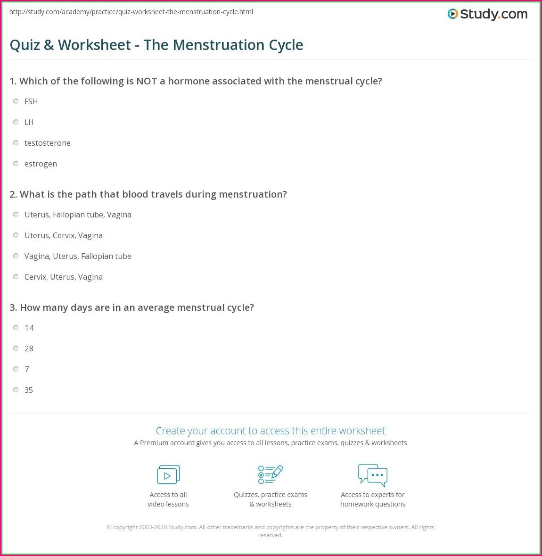 Menstrual Cycle Worksheet Honors
