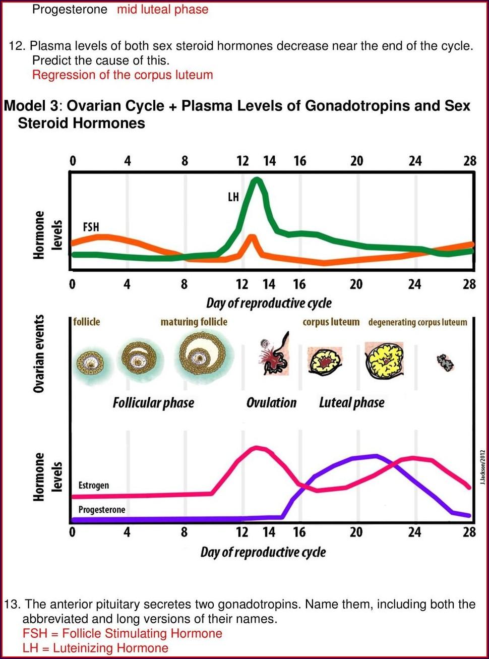 Menstrual Cycle Worksheet Pdf