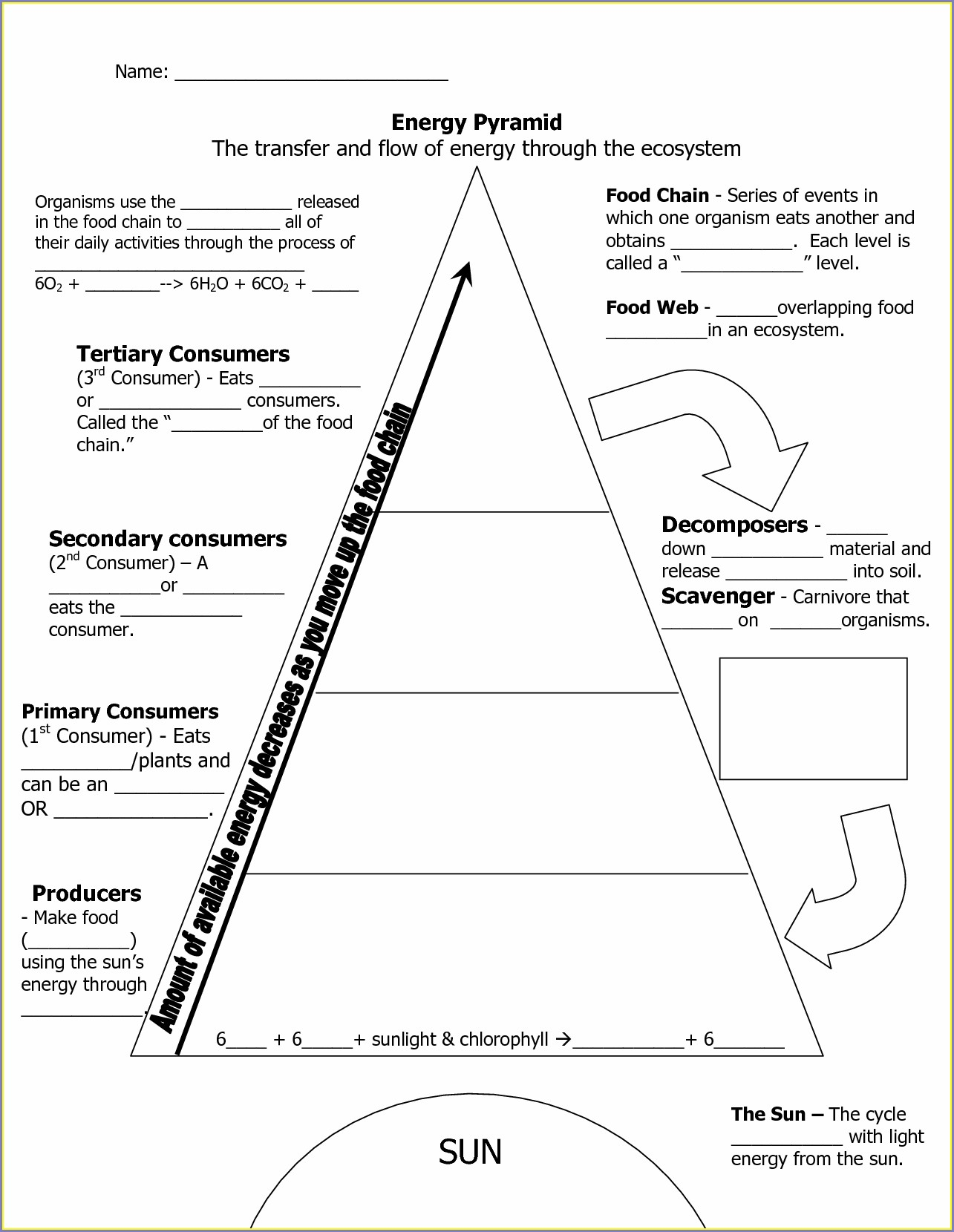 Middle School Energy Pyramid Worksheet