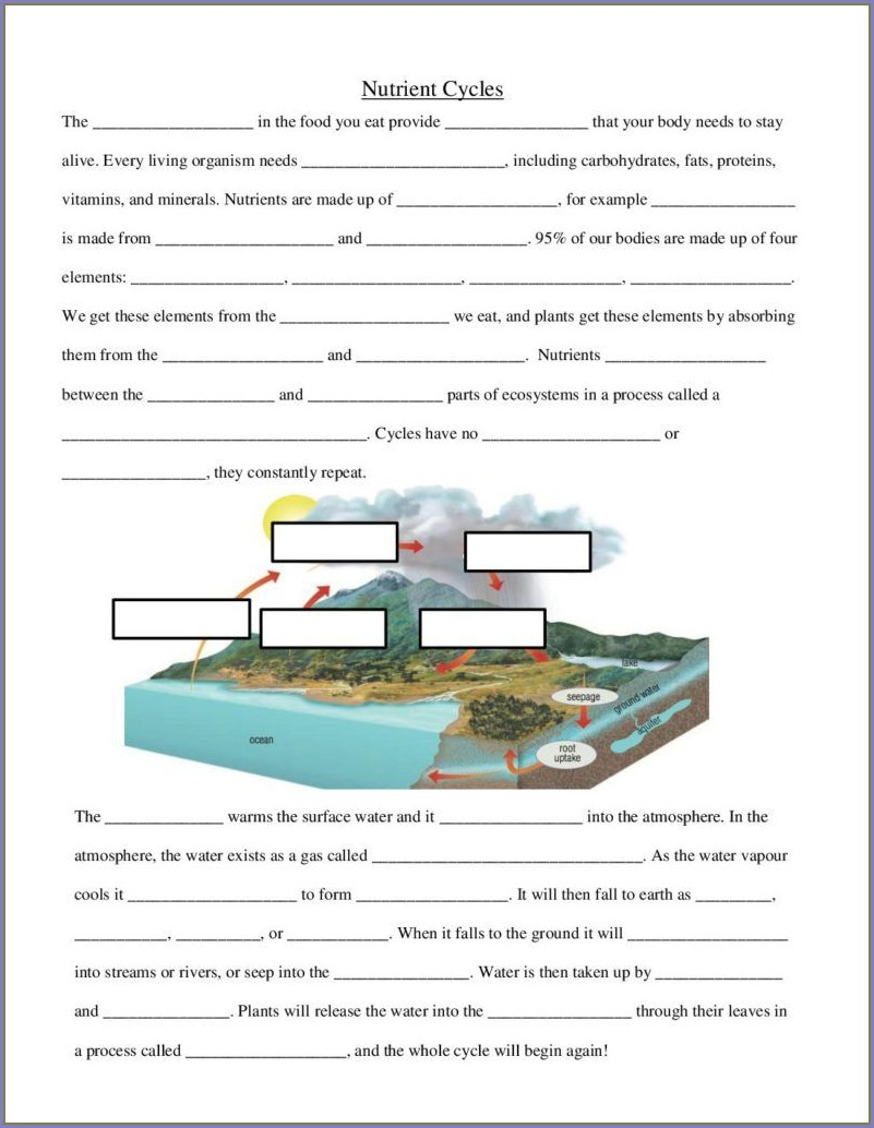 Nutrient Cycle Biology Worksheet