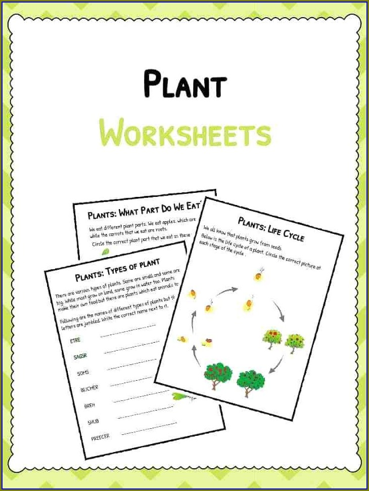 Plant Life Cycle Worksheet Pdf