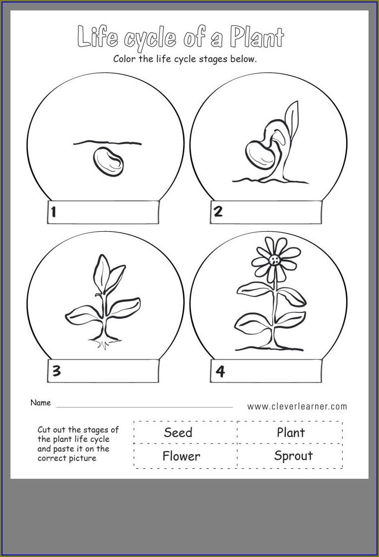 Preschool Plant Life Cycle Worksheet Pdf
