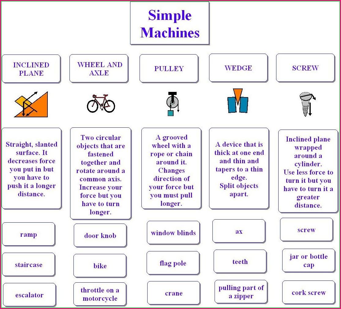 Primary 2 Science Worksheet